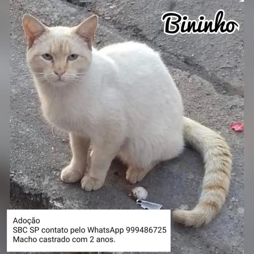 Bininho